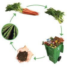 Compost cycle showing from vegetable back to the soil