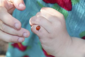 Fun bug craft ideas for kids