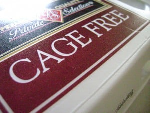 Cage free eggs in carton