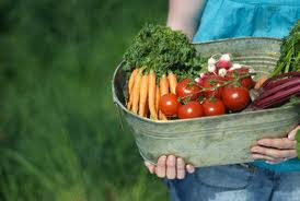 Fresh vegetables in container from farming